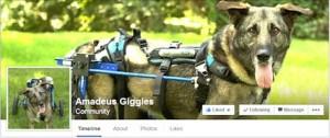 Amadeus FB